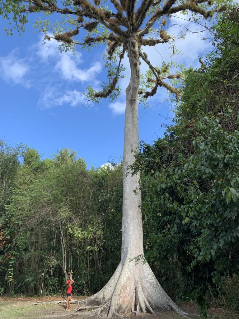 Belize_2019_Tikal_AmandaTangNianCeiba